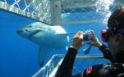 shark-cage-diving-in-south-africa