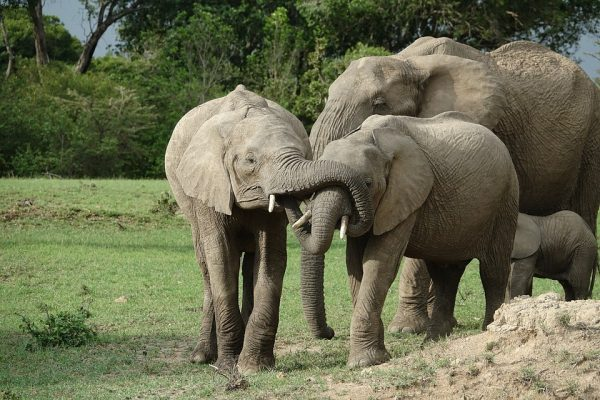 Masai Mara safari2
