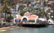 Explore Catalina Island's Wild Side with the Ultimate Land and Sea Adventure